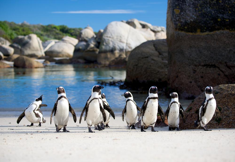Boulders Beach in Cape Town